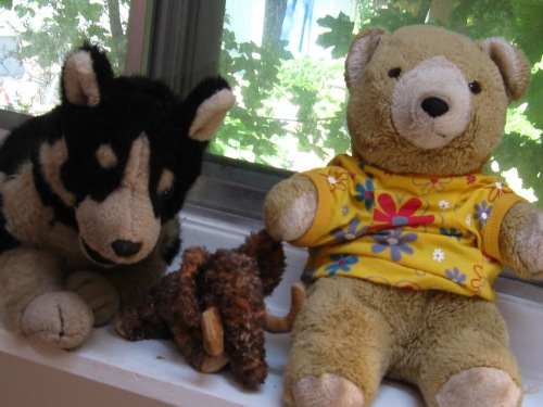 More flowers and stuffed animals 015