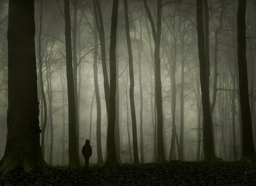 Image result for Walking through dark woods