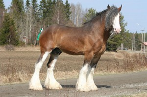Hi - I am a Clydesdale. My name is Clyde - but you can just call me Roadblock...